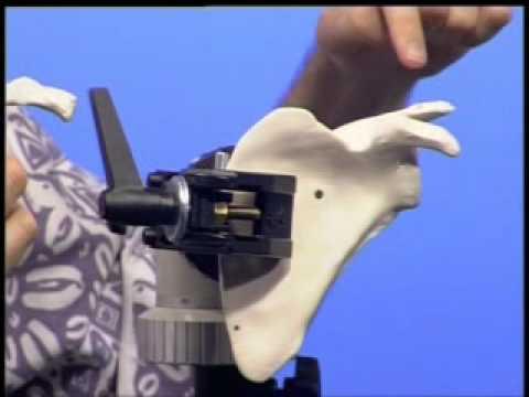 Anatomie der Schulter - Schultergürtel - Scapula - Clavicula - YouTube