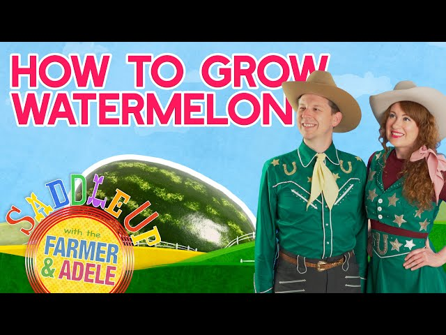 Saddle Up: How To Grow Watermelon