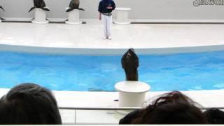 SeaworlD Тюлень 1.MP4