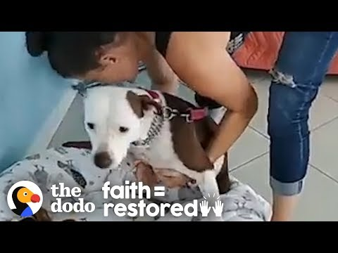 This Dog Was So Scared She Had To Be Carried Everywhere   The Dodo Faith = Restored