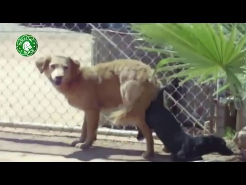 Animal matings video-Amazing Dogs mating hard-Mussic Animal mating max volume thumbnail