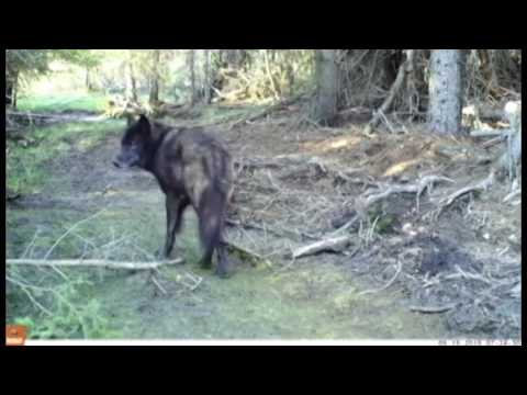 Nature At Its Candid Best: Wildlife Cams In BC