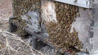 Jupiter Farms Homes For Sale: A Beehive Of Activity