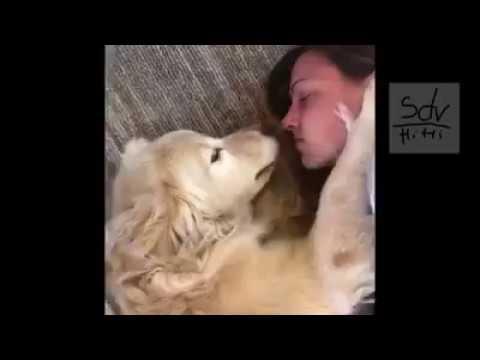 funny moment of the dog 1 -sdv | FunnyDog.TV