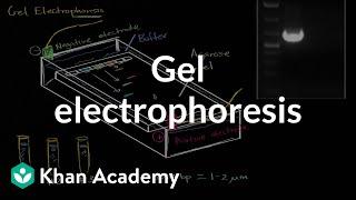 Gel electrophoresis | Biomolecules | MCAT | Khan Academy