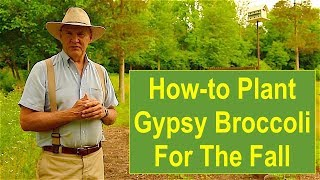 Tips and Ideas on How-to Plant Gypsy Broccoli for the Fall