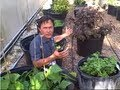 Container Gardening, Sprouting & More at Hippocrates Health Institute