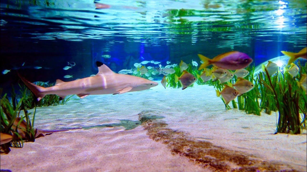 Sea Life Oberhausen 4k Uhd Youtube