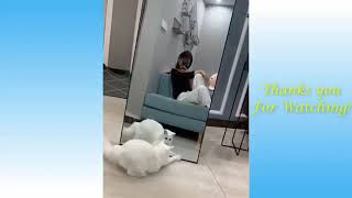 #Cute best And Funny Animals Compilation