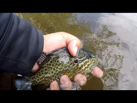 Multi-Species Fishing at the Memorial Park (Cinnaminson, NJ)