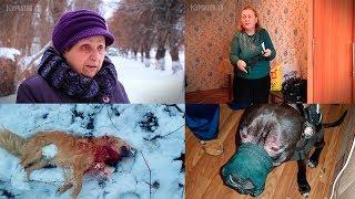 В Курчатове питбультерьер загрыз собаку