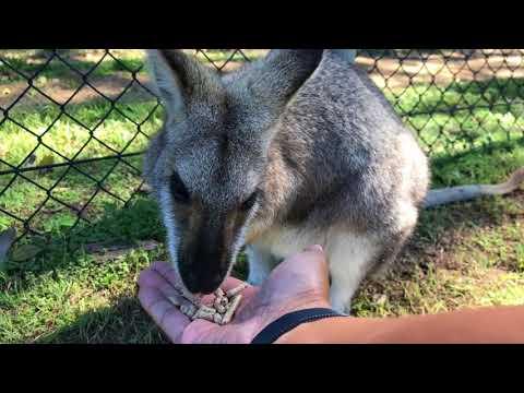 2017 Australia Trip - Brisbane, Queensland