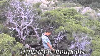 видео Стили ландшафтного дизайна
