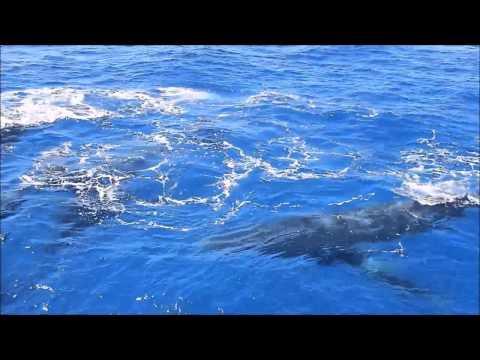 Whale Watching From Bundaberg Port Marina