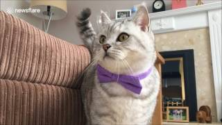 Alaska town's purr fect unofficial cat mayor dies
