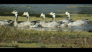 Keoladeo National Park - An Enduring Paradise for Birds
