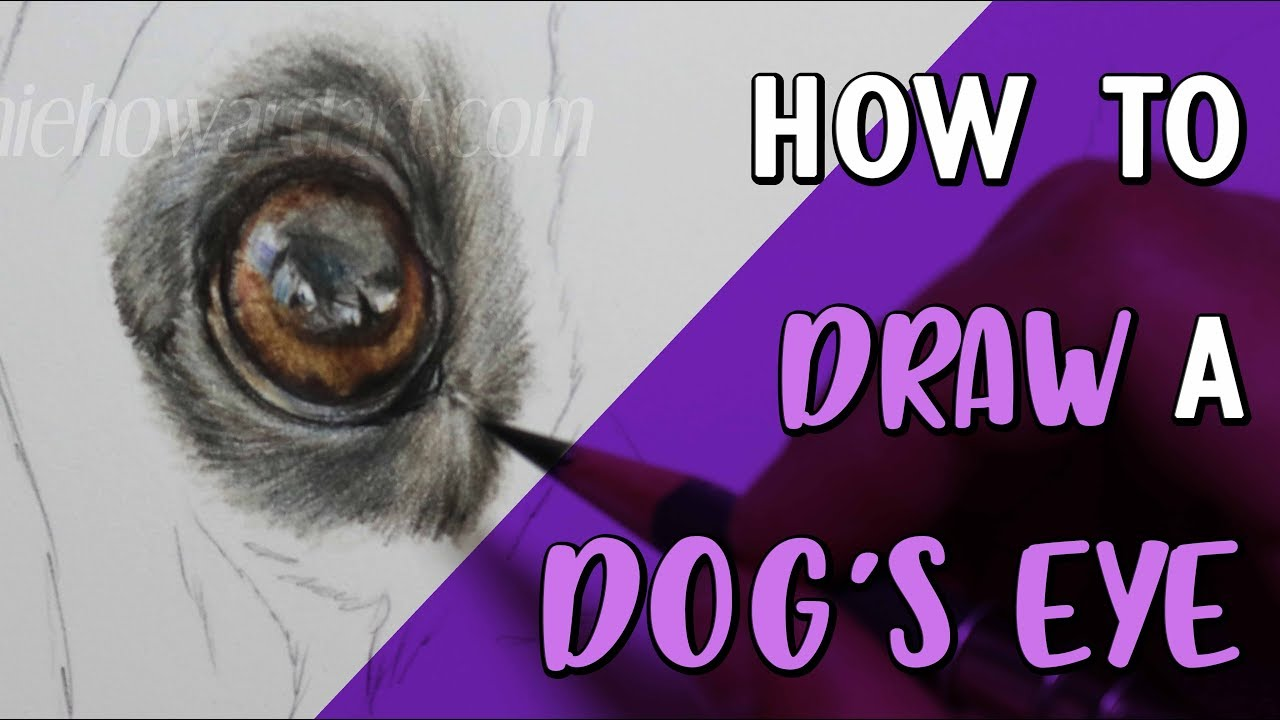 how to draw a dog s eye coloured pencil drawing tutorial youtube