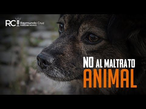 ¡NO AL MALTRATO ANIMAL!
