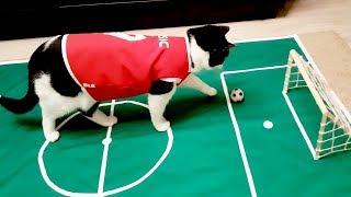 Ronaldo? Messi? No! Pusiс the cat!