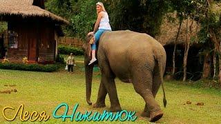 Леся Никитюк — укротительница слонов Луангпрабанга. Орел и решка. Лаос. За кадром. VLOG