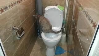 Кошка ходит на унитаз. Прикол