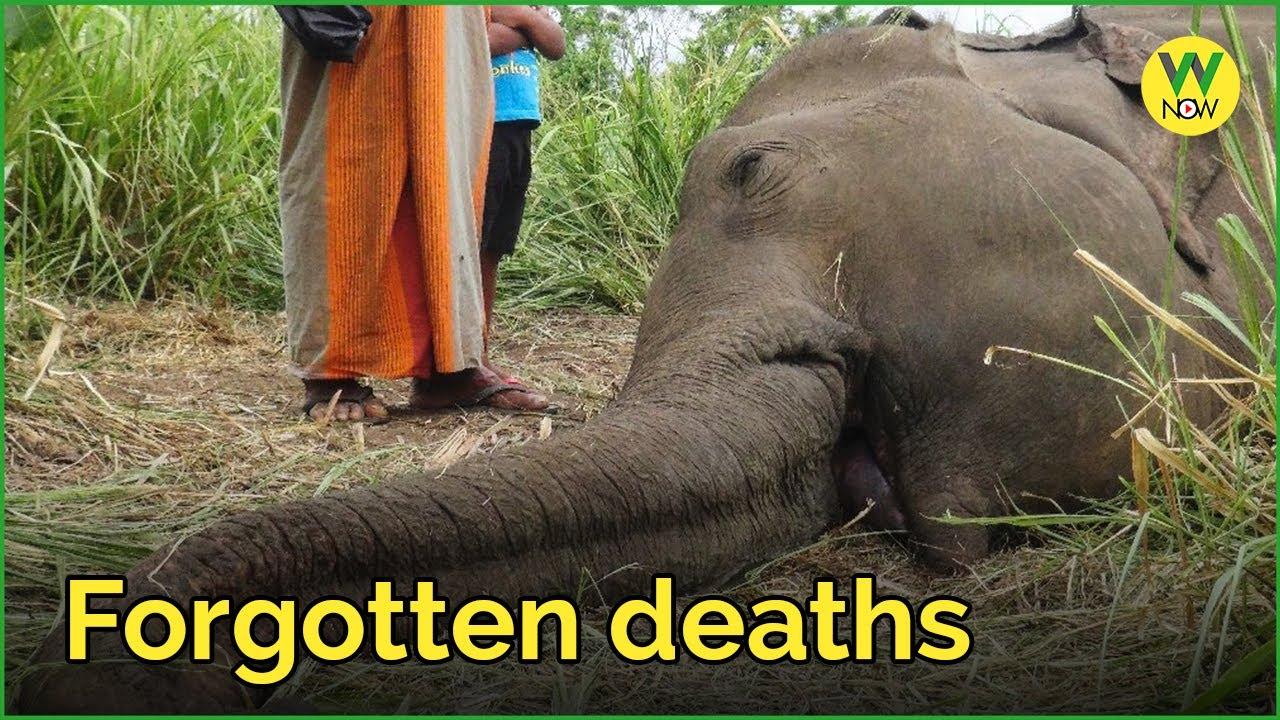 Forgotten deaths