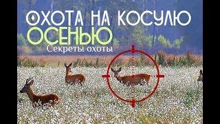 Правила охоты на косулю осенью