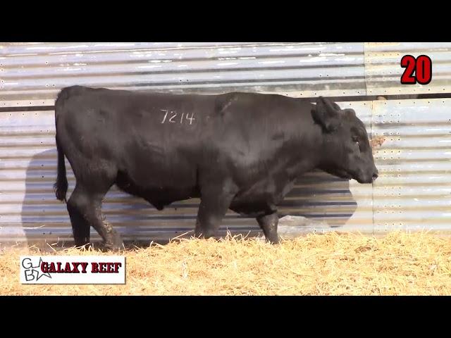 Galaxy Beef Lot 20