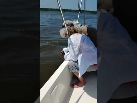 Curtis - Family On A Boat Have Amazing Encounter With A Dolphin