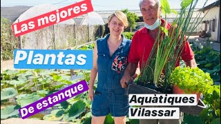 ❤️Las mejores plantas de Estanque, cuidados y mantenimiento  /AQUÀTIQUES VILASSAR