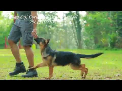 Teaching A Dog To Heel In Simple Stages. Call Now 9961310970.subscribe our channel for more updates.