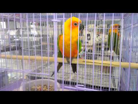 beautiful PARROTS for sale at a PET STORE