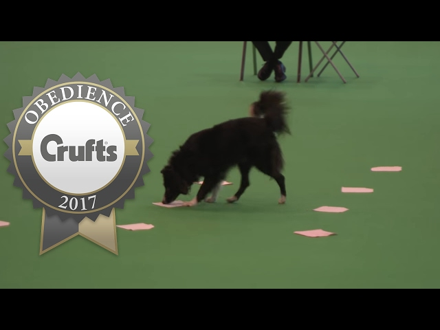 Obedience Championship - Bitches - Scent - Part 3 | Crufts 2017