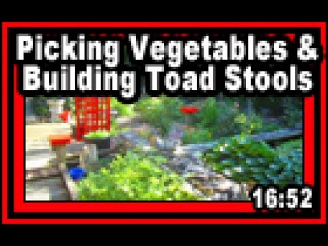 Picking Vegetables & Building Toad Stools - Wisconsin Garden Video Blog 783