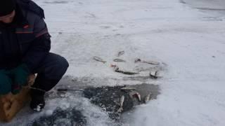 Рыбалка зимой Красноярское море