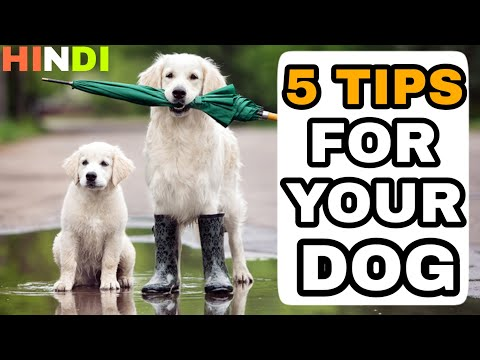 5 Rainy Season tips For Your Dog || Dog training in hindi ||