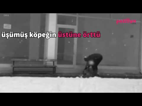 Giresun'daki belediye çalışanı soğukta üşüyen sokak köpeğine kıyamadı ve...