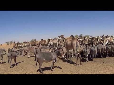 TVD-Dakar; Day #8, Trip: Mauritania, Adrar to Trarza region