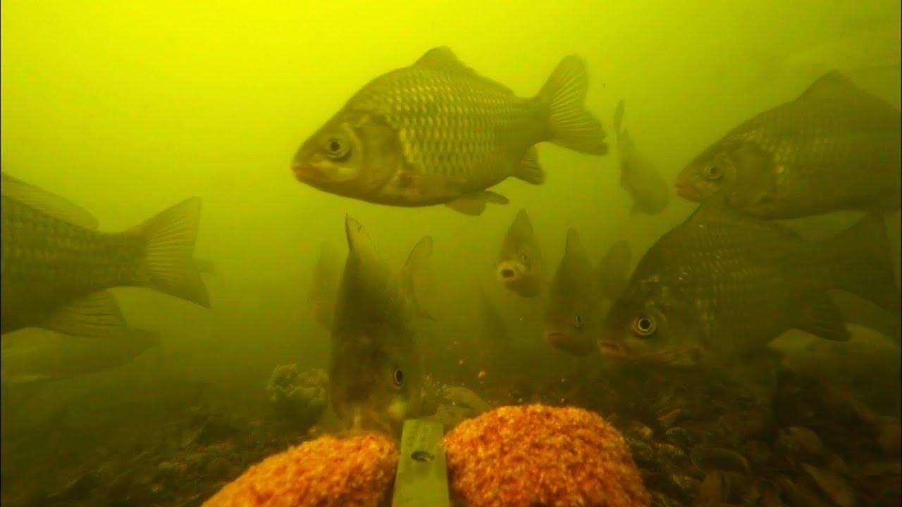 Шок! Реакция рыбы на жмых: кукуруза + чеснок | эксперимент с прикормка для карася | рыбалка 2020