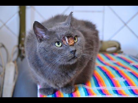 Кот инородное тело