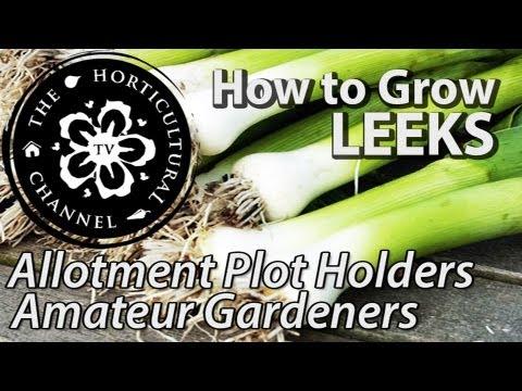 how to grow leeks seeds indoors