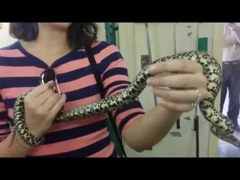 Behind the scenes of the Audubon zoo-part 1