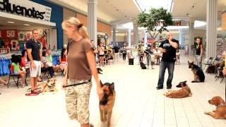 Teaser Video Of Beyond The Leash K9 Training Demonstration At Local Mall