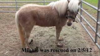 Minnie the Rescue Pony Gets Her Overgrown Hooves Trimmed with a Sawzall