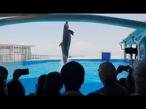 Espectáculo Con Delfines Hermosos 🐬 Acuario De Veracruz