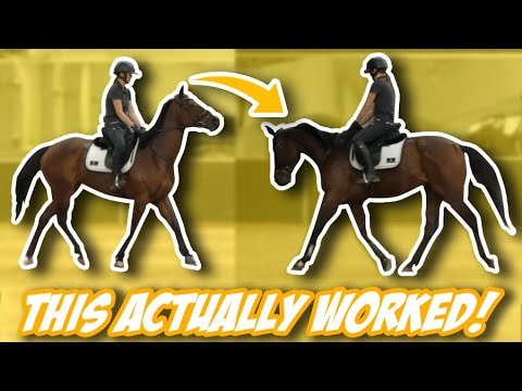 I CAN'T BELIEVE THIS HORSE RIDING TIP WORKED! (Thoroughbred Transformation) Thoroughbred Horses