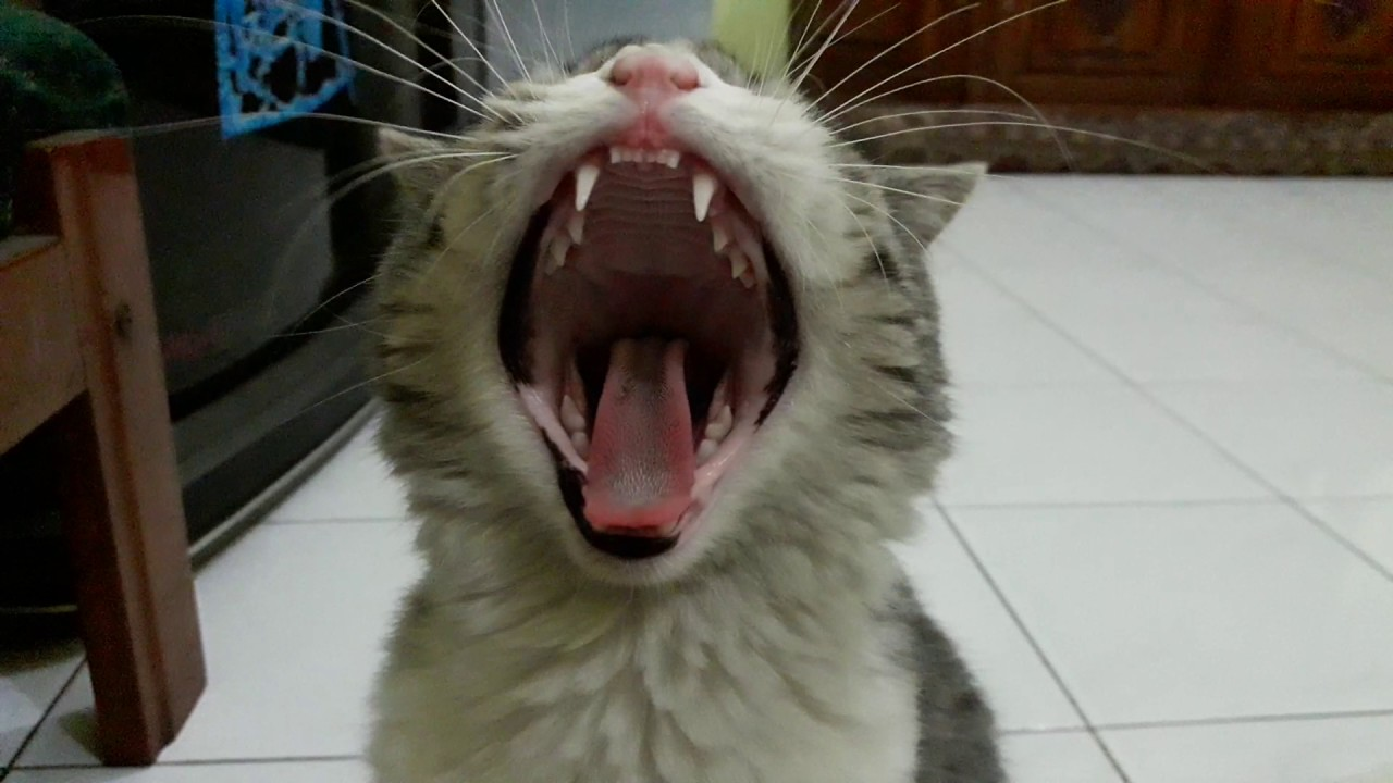Download 94+  Gambar Kucing Ganteng Paling Bagus HD