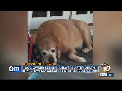 Owner says dog died after grooming session