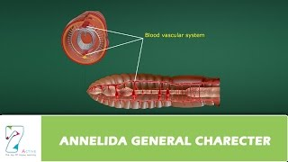 ANNELIDA GENERAL CHARECTER