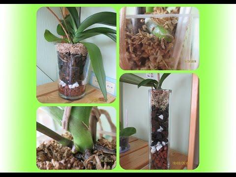 Орхидея в стекле через 2 месяца и др. орхидеи